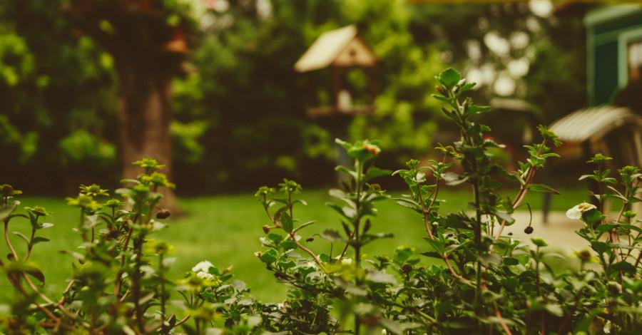 Premeňte vašu záhradu na oázu relaxu: Takto sa vám to podarí!