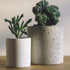 3 rastliny, ktoré sú nenáročné na údržbu a dotvoria interiér